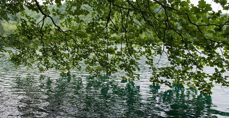 fishing near trees