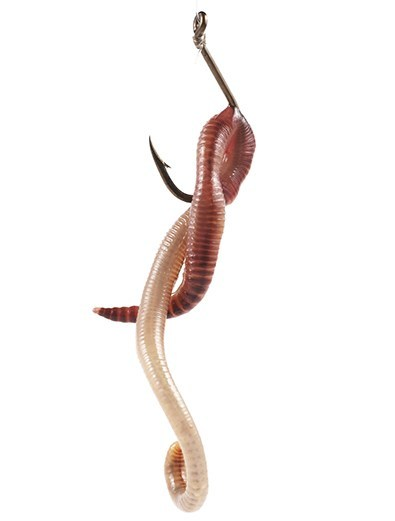 do not rig worms on a hook like this