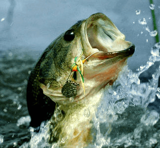 5 must have bass lures