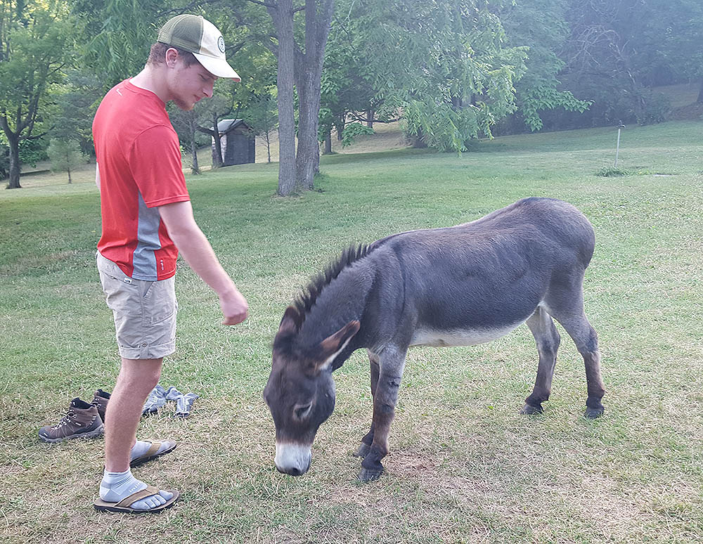 donkeys on the appalachian trail